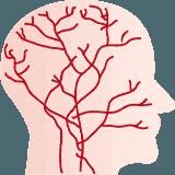自律神経の乱れサイクル