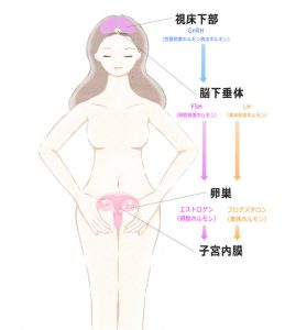 女性ホルモン分泌
